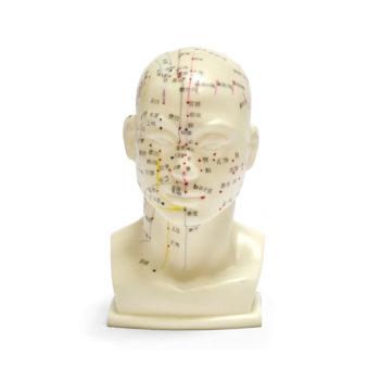 Modelo acupuntura china cabeza